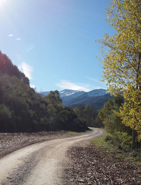 paisaje ruta al hayedo