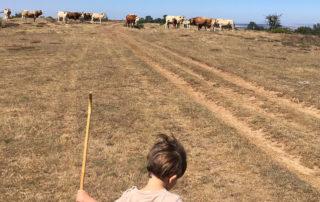 Casas rurales en Burgos para ir con niños